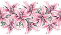 Pink lily flowers isolated on white background. Watercolor handwork illustration.   Seamless pattern frame border with lilies Royalty Free Stock Photo