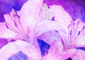 Pink lily stylized floral picture with texture Stock Photography
