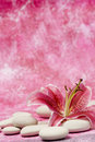 Pink lily on white pebbles Stock Photo