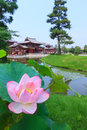 Pink lotus and Byodo-in temple in Kyoto, Japan Royalty Free Stock Photo