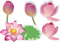 Pink lotus collection Stock Image