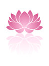 Pink lotus illustration of with reflection Royalty Free Stock Images