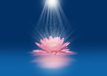 Pink lotus with light beams floating on water Stock Images