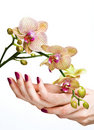 Pink manicure and orchid Stock Photos