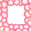 Pink Morning Glory Flower Border. Vector Illustration Royalty Free Stock Photo