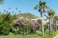 Pink oleander flowers nerium oleander in a green garden big blooming abundantly Stock Image