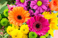 Pink and orange Transvaal daisy`s in bunch of flowers. Royalty Free Stock Photo