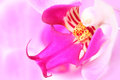 Pink orchid flower beautiful anatomy Stock Photos