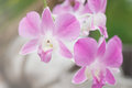 Pink Orchid Flower on Natural Background Royalty Free Stock Photo