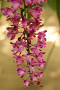 Pink Orchid Flower In The Nature
