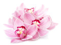 Pink orchid flowers isolated Stock Photos