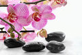 Pink orchid and zen stones on a white background Royalty Free Stock Images