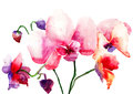 Pink orchids flowers watercolor illustration Royalty Free Stock Images