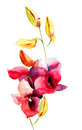 Pink orchids flowers watercolor illustration Stock Images