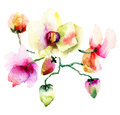 Pink orchids flowers watercolor illustration Stock Photo
