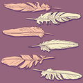 Pink and pale yellow feathers vector illustration Stock Photography