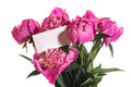 Pink peonies bouquet of on a white background Stock Image