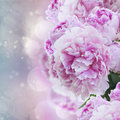 Pink peonies peony flowers on fancy bokeh background Stock Image