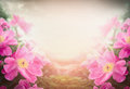 Pink peony on blurred nature background floral border Royalty Free Stock Photo