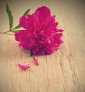 Pink peony flower on wooden background Stock Photos