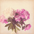Pink peony vintage background see my other works in portfolio Royalty Free Stock Photos