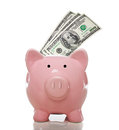 Pink piggy bank with hundred dollar bills Royalty Free Stock Photo