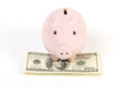 Pink piggy bank standing on stack of money american hundred dollar bills white background Stock Images