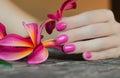 Rosa flor en mujer mano