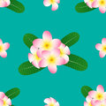 Pink Plumeria, Frangipani on Green Teal Background. Vector Illustration