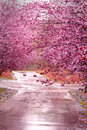 Pink pretty flowering trees are reflecting color up from a wet driveway good for background or flyer etc shallow depth Stock Photo
