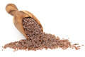 Pink Psyllium Seed Royalty Free Stock Photos