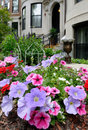 Pink and purple petunias in elegant urban garden Royalty Free Stock Images