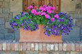 Pink and purple petunias planter beautiful in clay Stock Image
