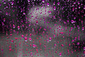 Pink raindrops Stock Images