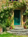 Pink rambling rose growing over green door of stone cottage in bloom grows around painted honey coloured Royalty Free Stock Photo