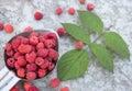 Pink raspberries in the metallic spoon
