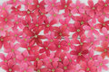 Pink and red flowers background Royalty Free Stock Photo