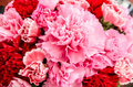 Pink red roses romantic bouquet Stock Photos