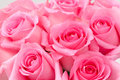 Pink rose Royalty Free Stock Image