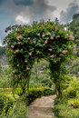 Pink Rose Arch