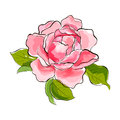 Pink rose beautiful stylized watercolor illustration vector Stock Images