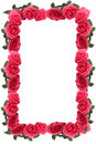 Pink rose border or frame Stock Photos