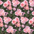 Pink rose flower garden grass summer nature seamless pattern texture background Royalty Free Stock Photo