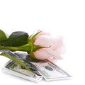 Pink rose flower and money dollars dollars flowers expensive expensive gift Royalty Free Stock Image