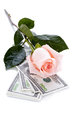 Pink rose flower and money dollars dollars flowers expensive expensive gift Stock Photo
