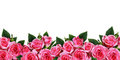 Pink rose flowers border