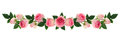 Pink rose flowers and buds line arrangement Royalty Free Stock Photo