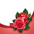 Pink rose flowers composition on and white background Royalty Free Stock Photography