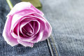 Pink rose on jeans background macro view shallow dof Royalty Free Stock Photos