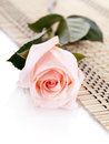 The pink rose lies on a napkin beautiful white background flower Royalty Free Stock Photography
